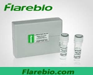 Reg3g antibody FITC conjugated