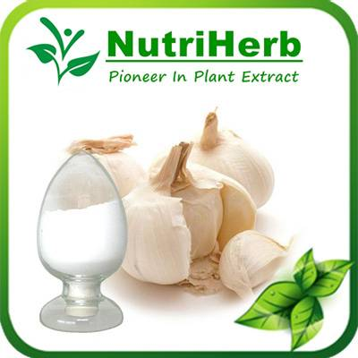 Garlic Extract Powder 1%-10% Allicin