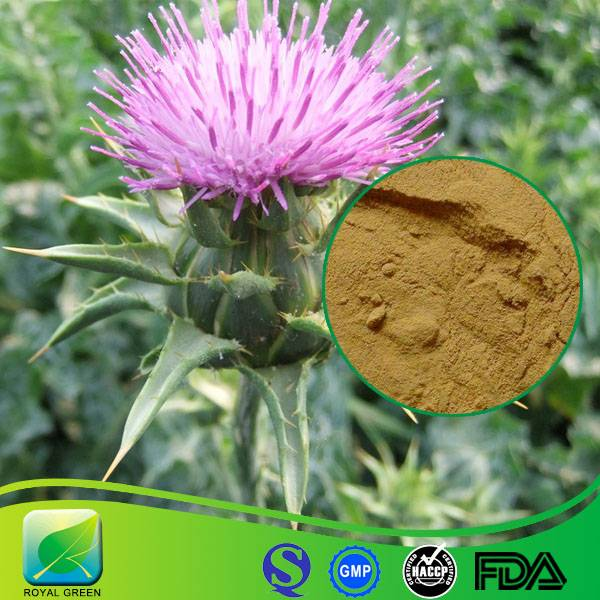 GMP Certified Manufacturer Supply Milk Thistle Extract