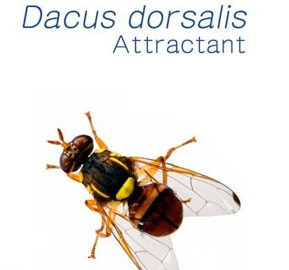 pheromone lure of Fruit Fly Dacus dorsalis (Oriental Fruit Fly)