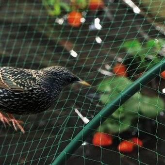 BOP bi-oriented plastic anti bird net /anti-bird net