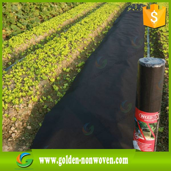 Nonwoven Factory cheap pp agriculture tnt non-woven fabric roll for plant cover,ground cover, strawb