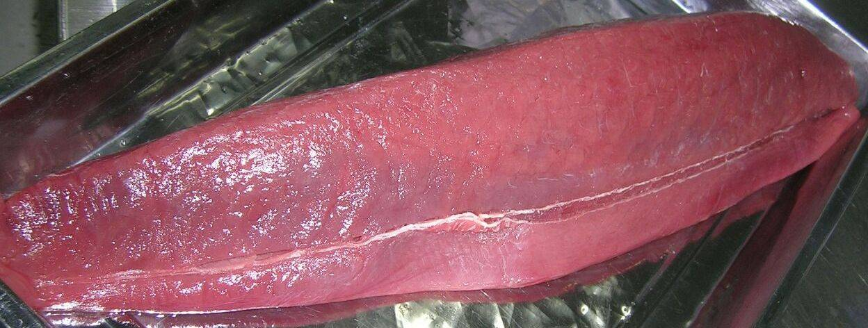 Processed Tuna - Frozen Loin Tuna