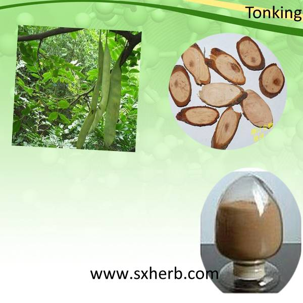factory price cassia nomame extract powder