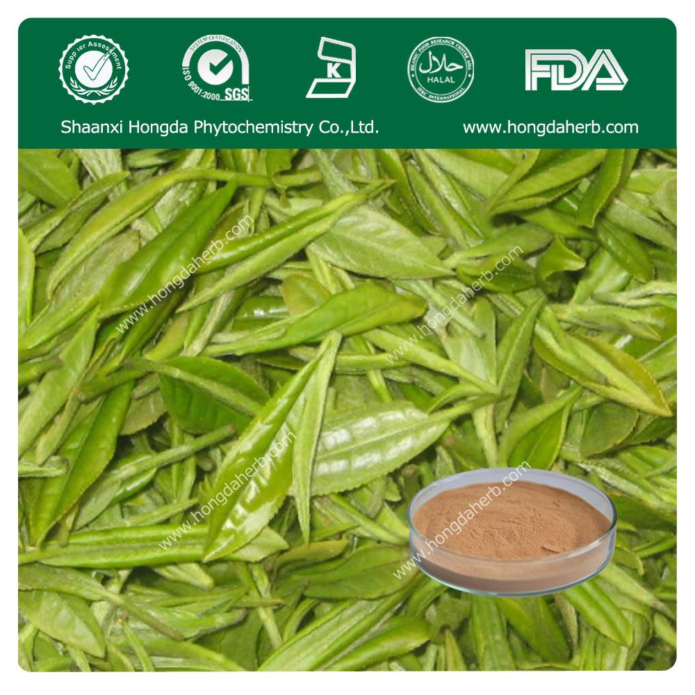 Green Tea Extract 100%pure powder TP 98%