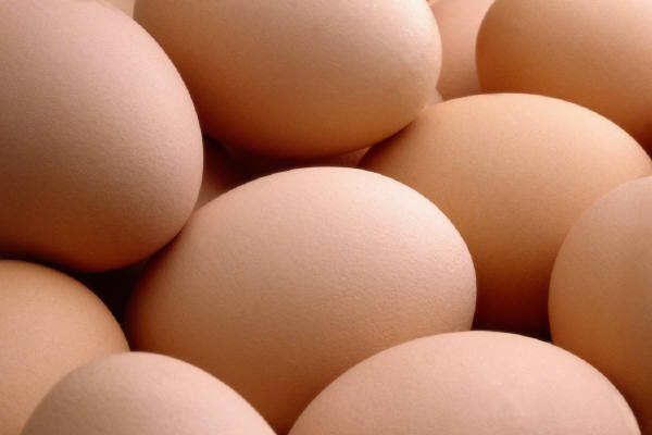 Fresh table chicken egg white and brown size : 40g-50g-60g-65g-70g