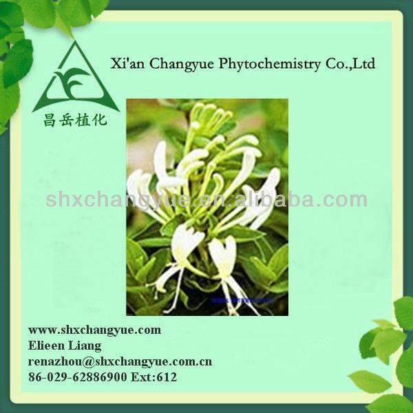 Certified 25% Chlorogenic acid HoneySuckle Flowers Extract