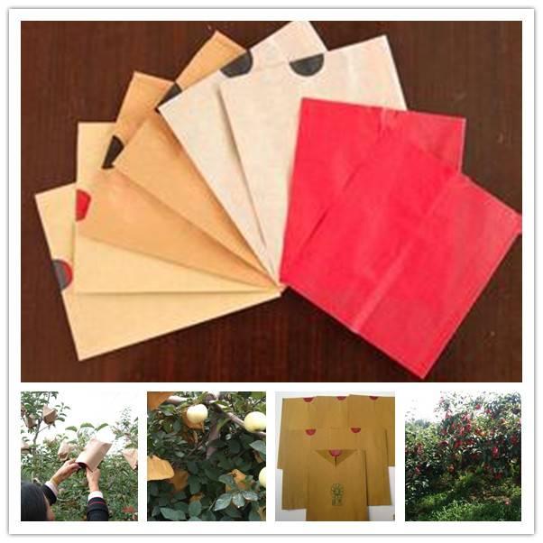 apple fruit grow paper bag