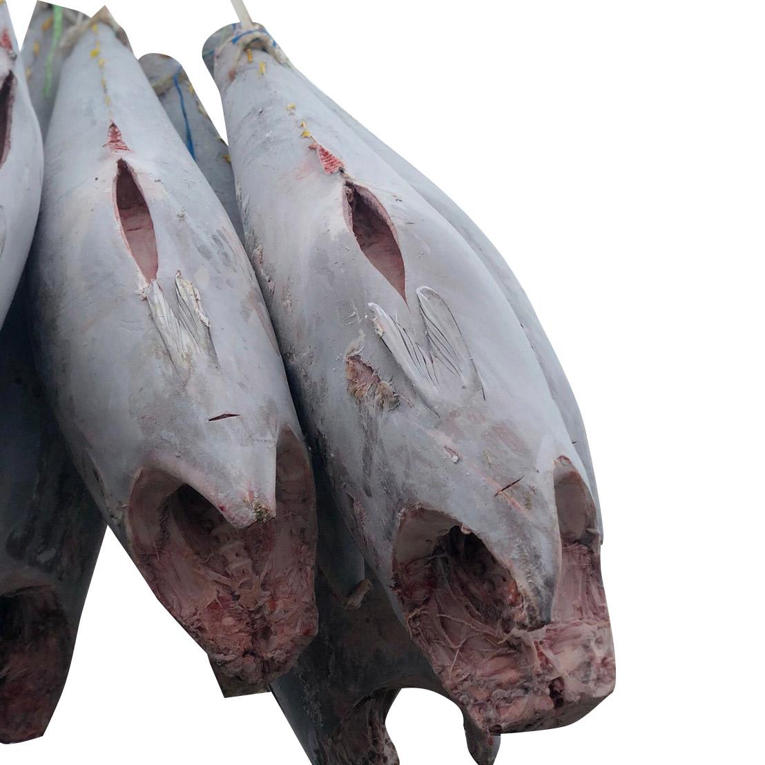 IQF yellowfin Frozen Tuna Fish