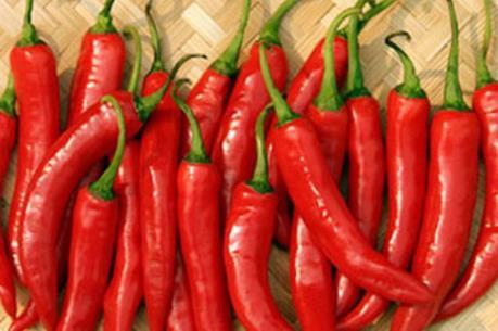 Vietnam fresh hot chilli capsicum