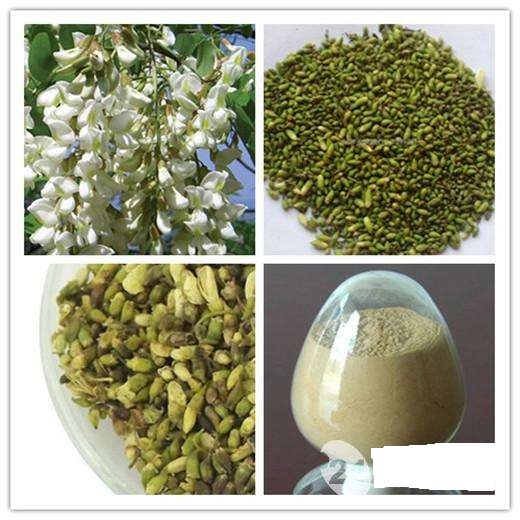 factory supply Rutin,rutin powder, natural rutin with lowest price