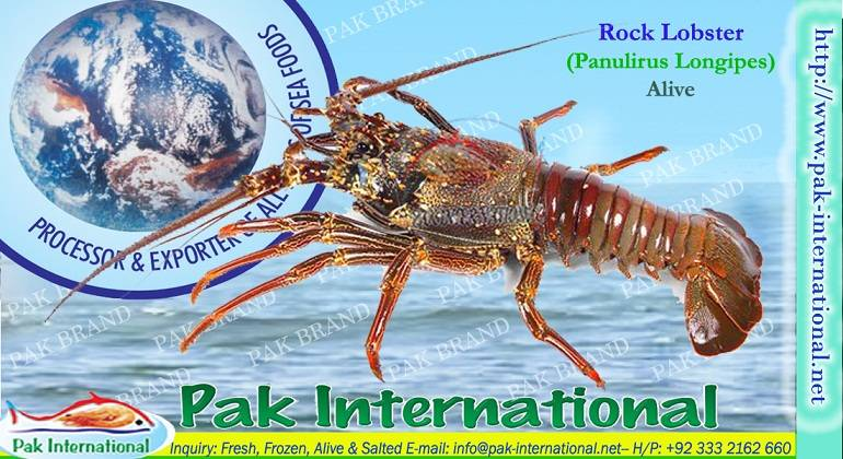 LIVE ROCK LOBSTER