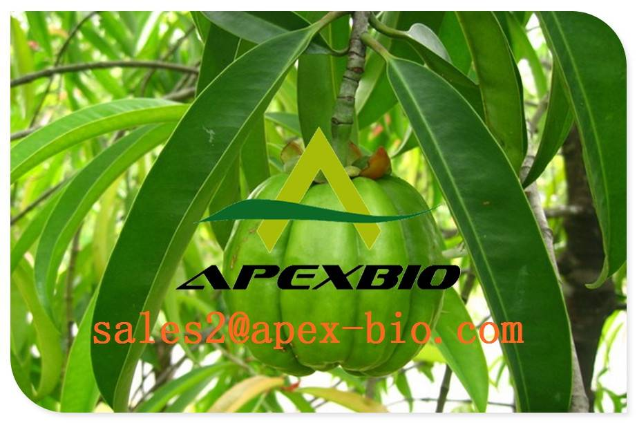 supply best quality Garcinia Cambogia Extract