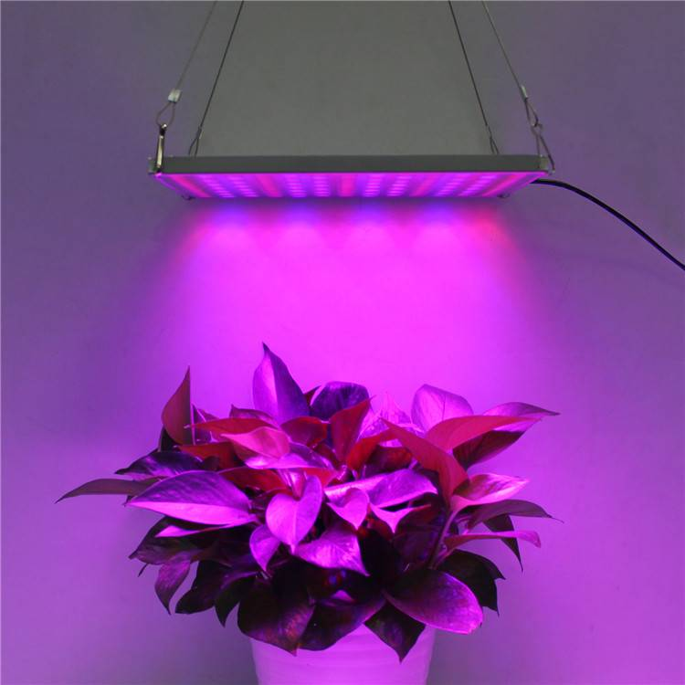 LED Grow Light HY-MD-D169-S