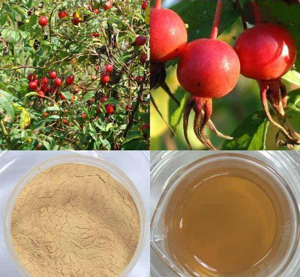 Rose Hip Extract 20% Polyphenols