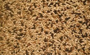 cumin Seed,Canary Seeds,Chia seeds,sunflower seeds,Rape Seeds