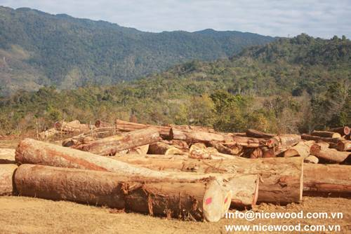 Balau round log