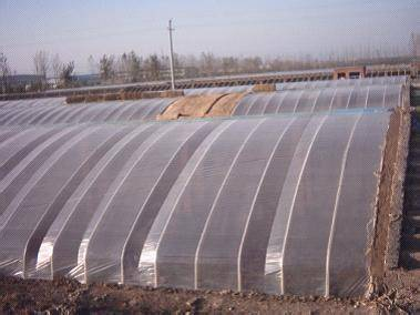 Greenhouse film with variable transpancy