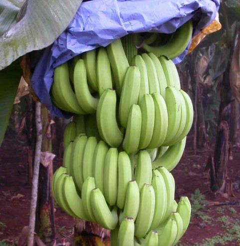 BANANA GROWING PROTECT PAPER BAG MACHINE