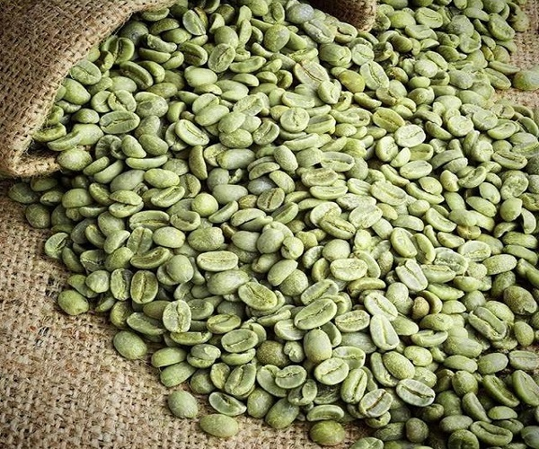 Sumatera Arabica Aceh Gayo Specialty Green Coffee