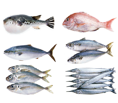Good quality fresh seafood fish