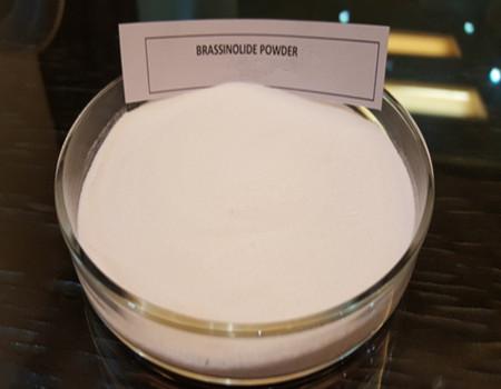 Brassinolide 95% TC 0.1% SP 0.2% SP Plant growht regulator