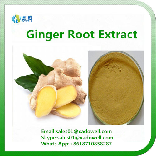 Natural High Quality Ginger Root Extract