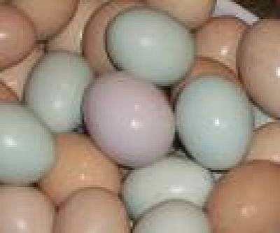 FRESH AND FERTILE PARROT AND PARROTS EGGS FOR SALE