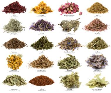 All Kind Of Plant Seed,Oil Seed and Herbal Extract