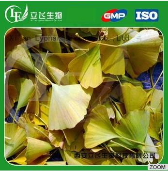 Reliable Manufacturer of Natural Ginkgo Biloba Extract