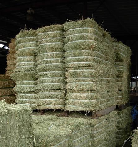 Alfalfa hay in bales in bulk