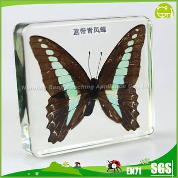 Benji Education Equipment Real Butterfly Specimens