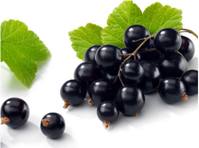 Blackcurrant extract anthocyanin 5%-25%