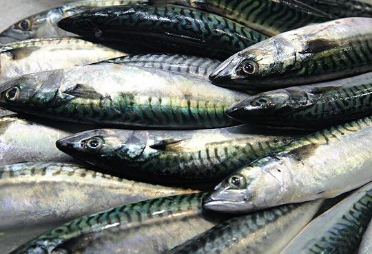 Frozen Fish Mackerel, Sardine Fish Prawns, Others