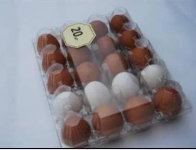 20x1 Egg Tray