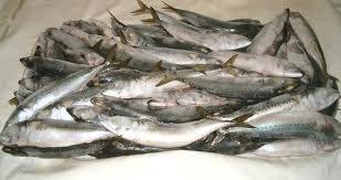 best quality frozen trout fish