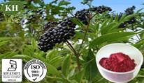 Elderberry Extract,  Anthocyanidins 3% to 25% by UV, 4:1 10:1