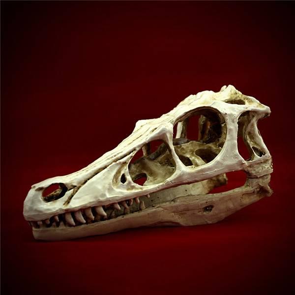 Tyrannosaurus Hadrosaurs resin Skull Museum Model Replica skeleton anatomy 18.5x7.5x7.5cm