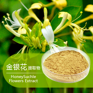 HoneySuckle Flower Extract,Chlorogenic Acid