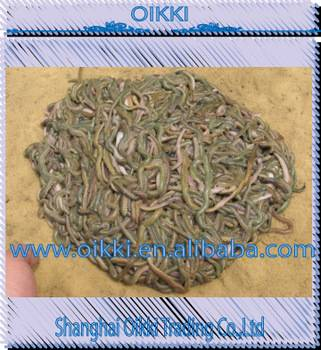 Living lugworm/living rag worm/ living fishing bait