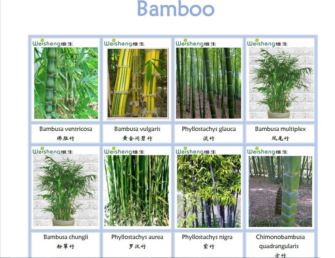 All Kinds of Nature Bamboo