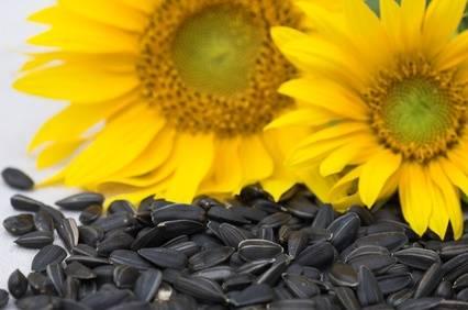 Sunflower Oil & seeds