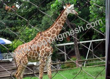 zoo animal enclosure, zoo bird netting,rope mesh, zoo mesh