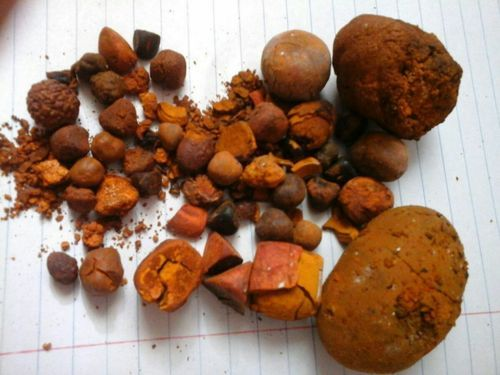 OX Gallstones,Cow/ox gallstones