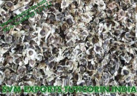 Moringa Oleifera Herbal Seed Exporters India