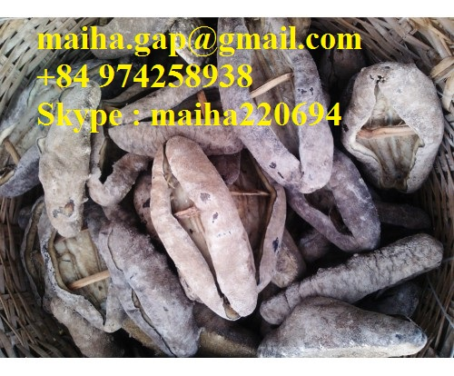 Dried Sea Cucumber From Vietnam Dried White Teat/Black Prickly Fish/Black Sand Fish
