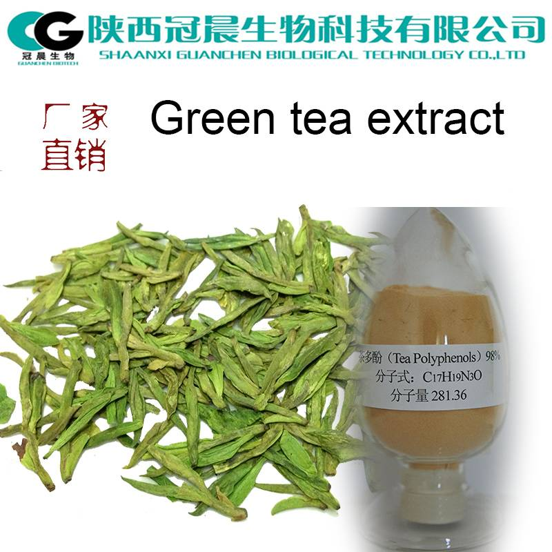 Pure natural green tea extract polyphenol 98% catachins70% EGCG50% for capsule