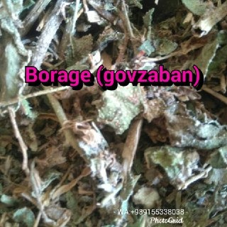 Wholesale: Borage , Gaozaban (Anchusa strigosa)