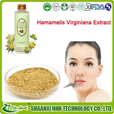 GMP China supplier high quality 100% natural and pure Hamamelis virginiana extract
