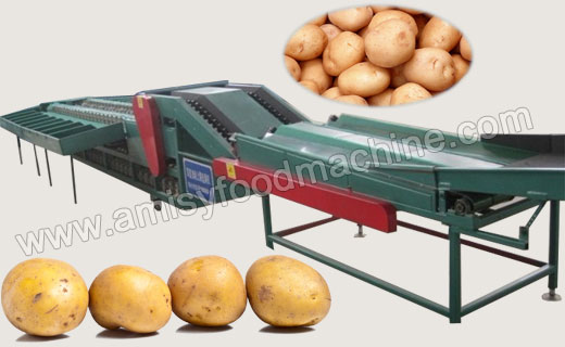 Automatic Fruit & Vegetable Sorting Machine